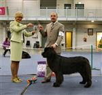 Cally wins Intermediate class and goes on to win Res Green Star Bitch at Newfoundland Club of Ireland 2008