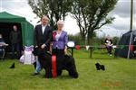 Cally winning RESERVE BEST IN SHOW