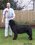 Cally wins reserve CC (Puppy) at Working & Pastoral 2008.