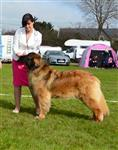 BEST OF BREED LEONBERGER